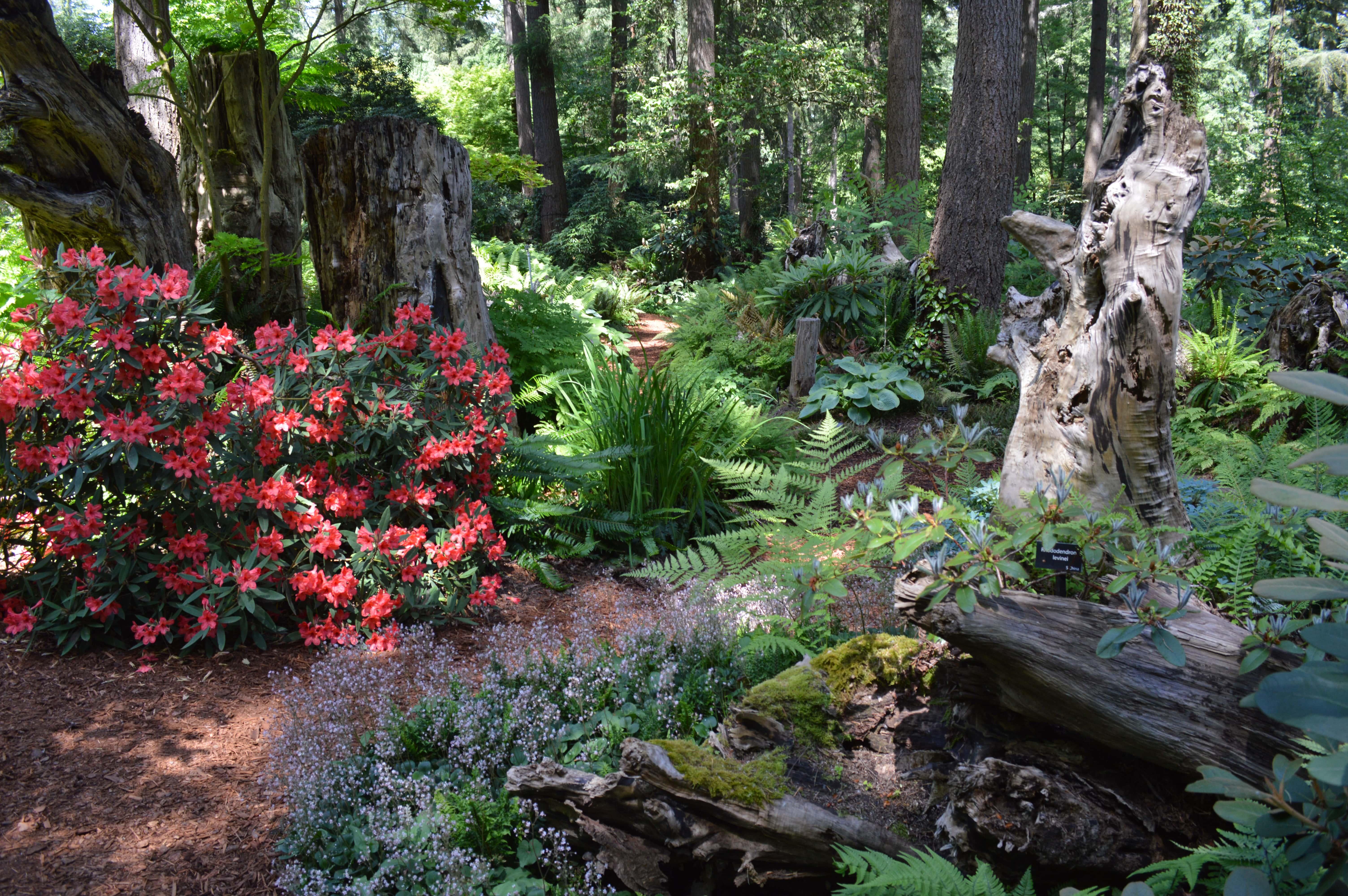 Mission Statement Rhododendron Species Botanical Garden