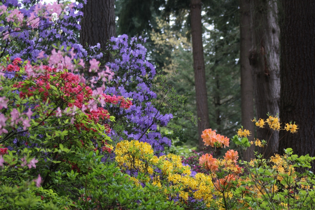 Visit Rhododendron Species Botanical Garden